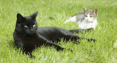 cats on the grass outdoor