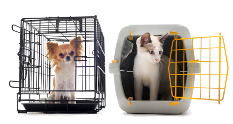 chihuahua-and-kitten-in-crates