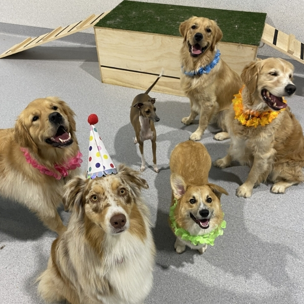 Party for puppies, puppy party, dog party