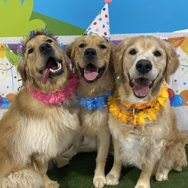 puppy party, dog party, doggy daycare parties, dog party, birthday parties for pups