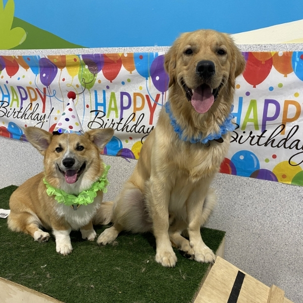 paw-party, party for dogs, doggy party, dog birthday party