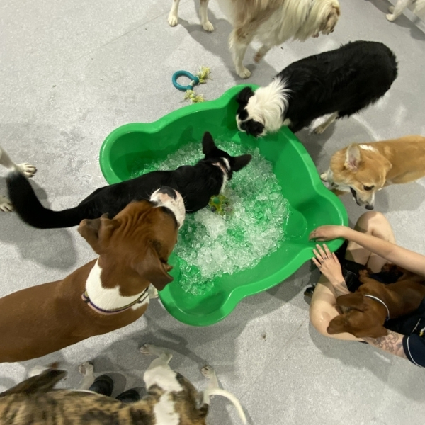 doggy daycare parties, dog party, birthday parties for pups, puppy party