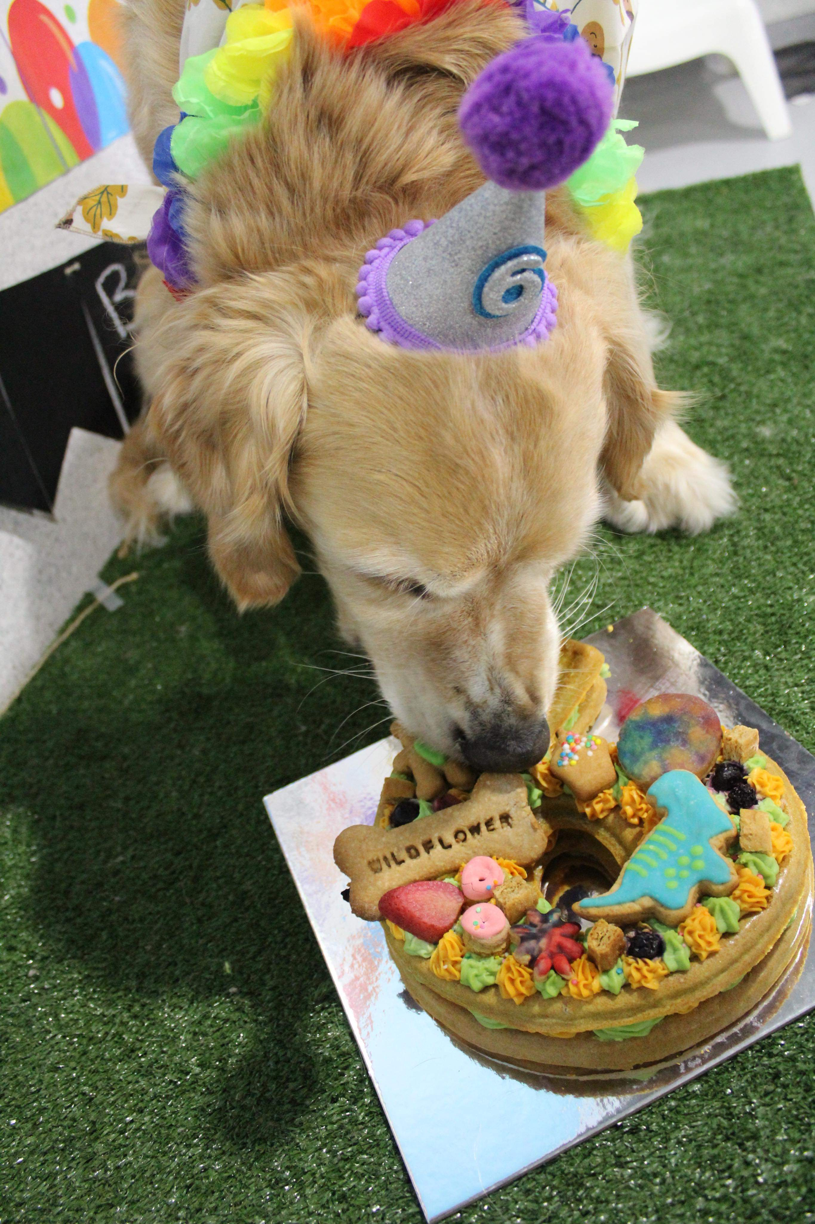Dog Party Cake in Adelaide