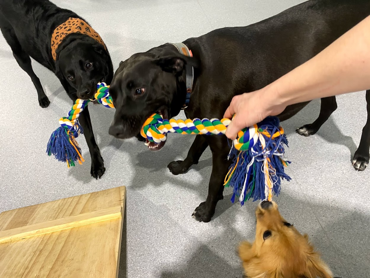 Dogs Play And Exercise at Day Care