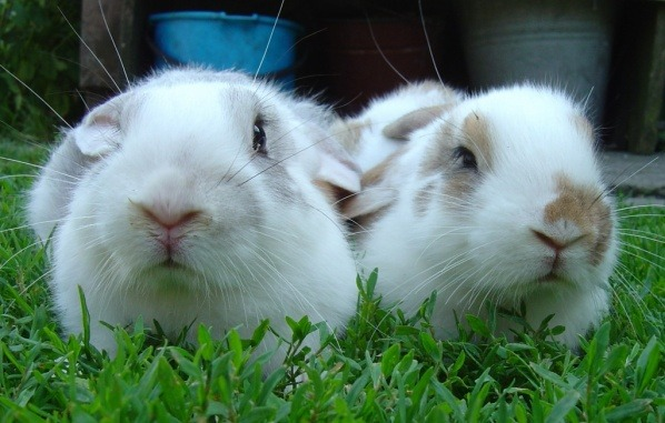 rabbits on the grass