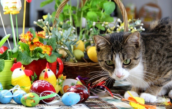 food-hazards-for-pets-on-easter