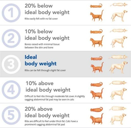 Rapid Weight Loss In Dogs Causes Treatment Diet Body Score