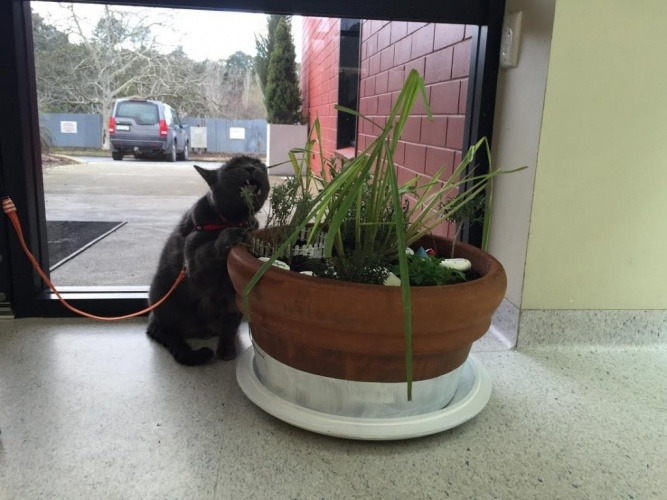 Create an indoor cat garden adelaidevet for Indoor gardening with cats