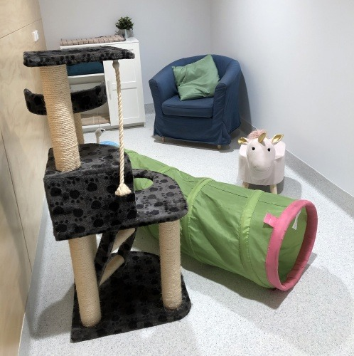 cat play area