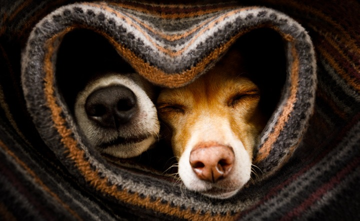 Dogs warm in bed