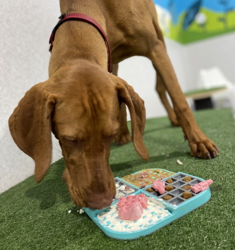 Dog Enrichment Food Puzzle at Day Care