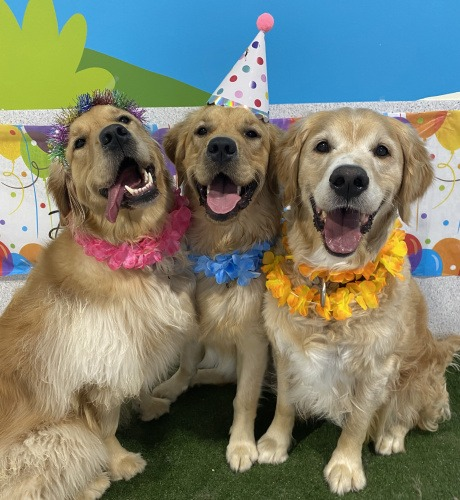 Dog Party Day Care