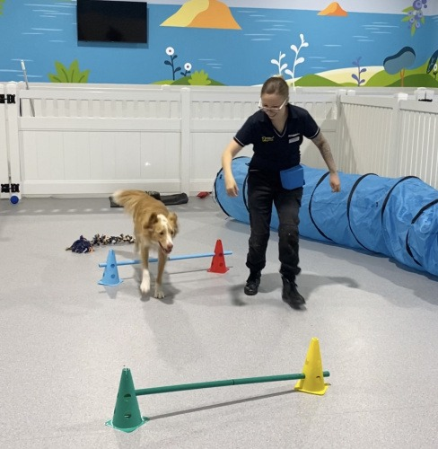 Dog Care and Training in Adelaide