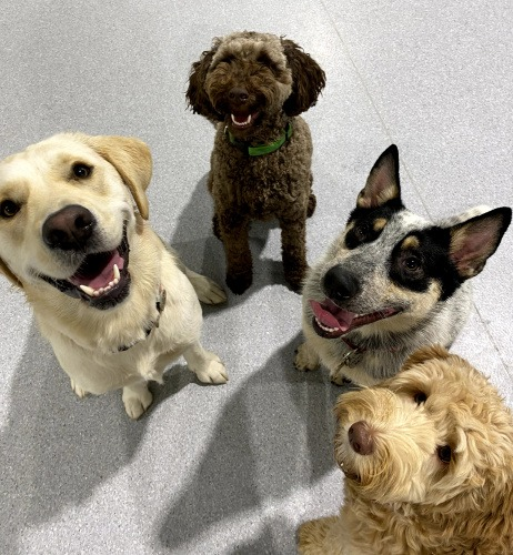 Dog Exercise and Friends