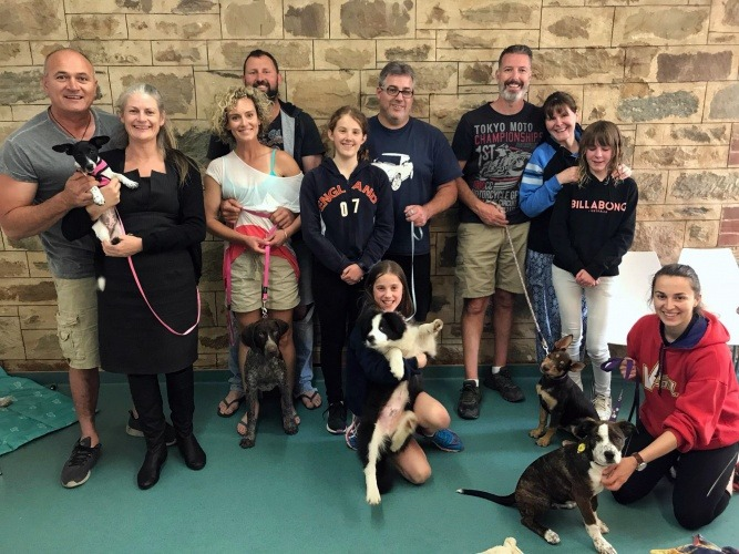 Group Puppy Classes at AdelaideVet
