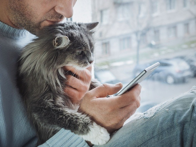 Veterinary phone consult