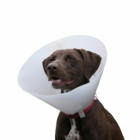 Castration or vasectomy for your pet