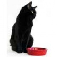 black cat with food
