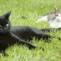 cats-on-the-grass-outdoor