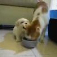 an-adorable-puppy-trying-to-get-some-attention-from-his-patient-feline-friend