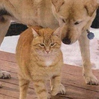 cat dog friend