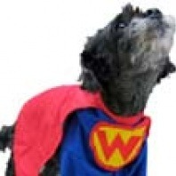 super wonder dog
