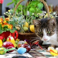 vetwest-names-food-hazards-for-pets-on-easter-also-offers-pyometra-cat-vomiting-treatment-ringworm-in-cats-treatment