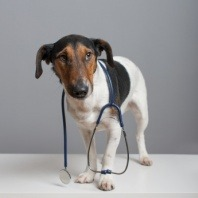 small-dog-and-a-stethoscope