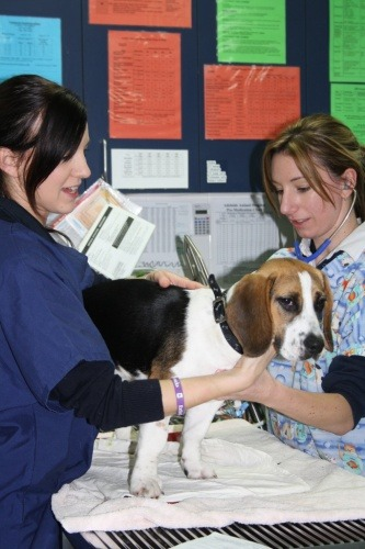 A Day In The Life Of A Veterinary Nurse Adelaidevet