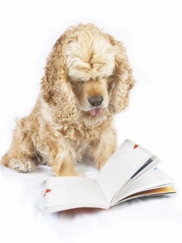 Adelaide Puppy Pre School for dogs and pups to learn and train ...